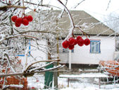 Viburnum berry on frost and house — 图库照片