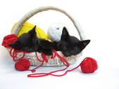 Kitties sleeping in the basket with yarn — Stock Photo
