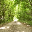 Road in forest. Light in tunnel — Stock Photo #1630526