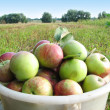 Apples in the basket — Stock Photo