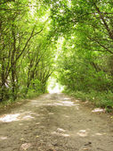 Road in the forest. Light in tunnel — Stock Photo
