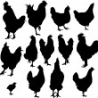 Royalty-Free Stock  : Silhouette of hens and roosters