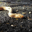 Snake on back gounde - Stock Photo