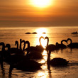 Royalty-Free Stock Photo: Romantic swans