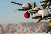 Fir tree branch with decoration — 图库照片