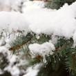 Snow covered fir needles — Stock Photo