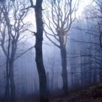 forêt mystérieuse — Photo #1650813