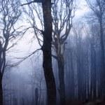 forêt mystérieuse — Photo #1650816