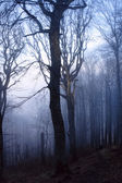 Mysterious forest — Stock fotografie