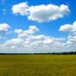 Golden wheat field with blue cloudy sky — Stock Photo #1887884