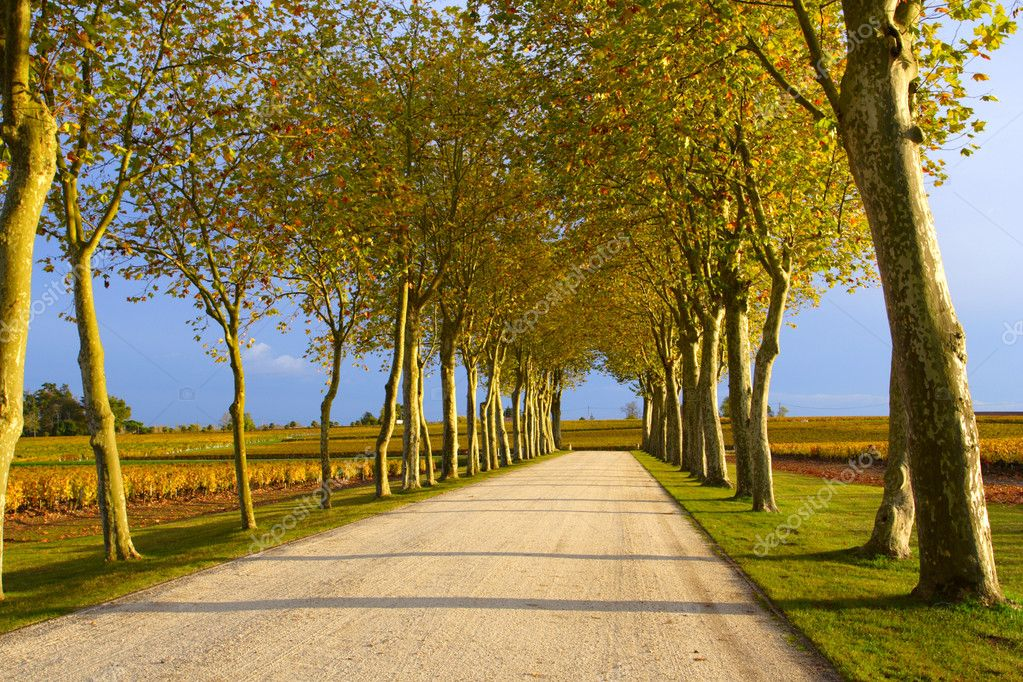 Autumn lane leading to the vineyard — Stock Photo #2573528