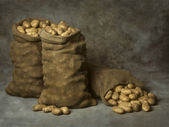 Burlap Sacks of Potatoes — Stock Photo