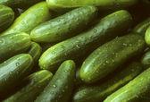 Pile of fresh cucumbers lying diagonally — Stock Photo