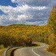 Autumn wood and road — Stock Photo