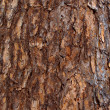 Bark of the Siberian cedar — Stock Photo