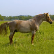Horse on meadow — Stock Photo #1663880