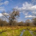 Autumn on a bog — Stock Photo #1668889