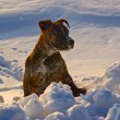 Puppy of dog beside snow snowdrift — Stock Photo #1732729