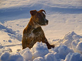 The Puppy of dog beside snow snowdrift — Stock Photo