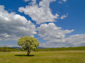The Solitary tree and cloudy sky — Stock Photo