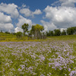 Summer panoramblossoming meadow — Stock Photo #1779317