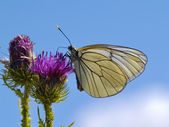 The Butterfly on thistle — Stock Photo