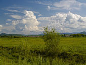Year green meadow and cloudy sky — Stock Photo