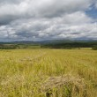 Heaps of straw on the cleaned fields — Stock Photo