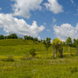Summer panorama a blossoming meadow — Stock Photo