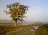 The Misty morning — Stock Photo