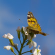 The motley butterfly against blue sky — Stock Photo