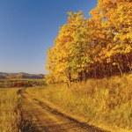 Autumn landscape with an oak grove — Stock Photo #2442815