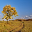 Autumn landscape with lonely tree — Stock Photo #2442971