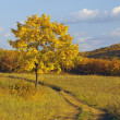 Autumn landscape with lonely tree — Stock Photo #2443111