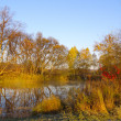 Autumn sunny day at wood lake — Stock Photo #2444249