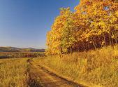 Autumn landscape with an oak grove — Stock Photo
