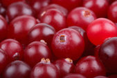 Some cranberries close-up. — Stock Photo