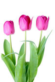Three pink tulips — Stock Photo