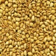 Yellow sweet wheat grain — Stock Photo