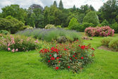 Rose's garden — 图库照片