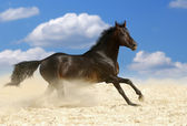 Dark brown horse — Stock Photo