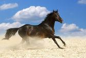 Dark brown horse — Stock Photo