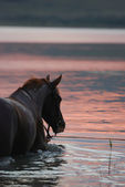 Chestnut horse and the girl in the water — Stock Photo