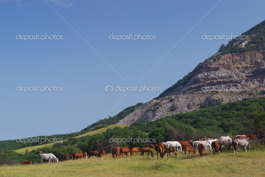 Arabian horses on pasture on mountain — Stock Photo #1685650