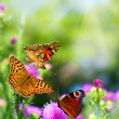 Butterflies on flowers - Stock Photo