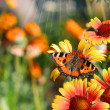Butterflies on flowers - Foto Stock