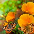 Butterflies on flowers — Stockfoto