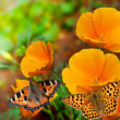 Butterflies on flowers — Stock Photo