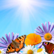 Stock Photo: Butterflies on flowers