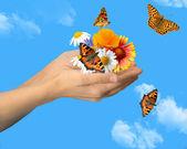 Hands with butterflies — Stockfoto